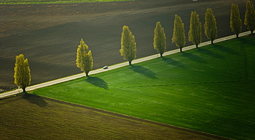 Poplar lined road, Skagit Valley, Washington, USA, Skagit Valley, Washington, USA