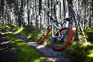 Mountain Bike on Trail, Cape Breton Island, Nova Scotia, Canada