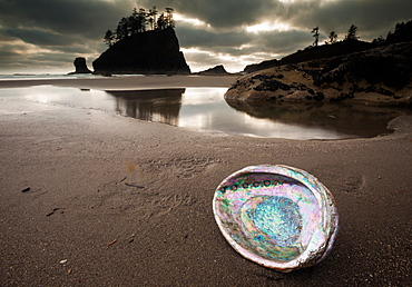An abalone shell on Second beach, Olympic National Park, Washington, USA, Second Beach, Olympic National Park, Washington, USA