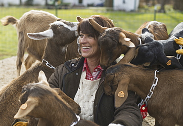 Farmer working and tending to the animals, Pine Bush, New York, USA