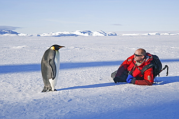 A man lying on his side on the ice, close to an emperor penguin standing motionless, Weddell Sea, Antarctica