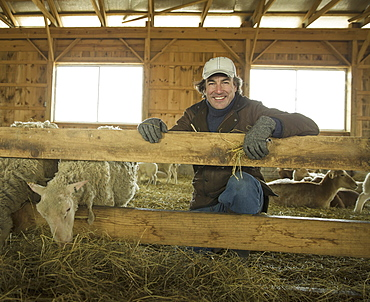 An Organic Farm in Winter in Cold Spring, New York State. A family working caring for the livestock. Farmer and sheep in a pen, Cold Spring, New York, U.S.A.
