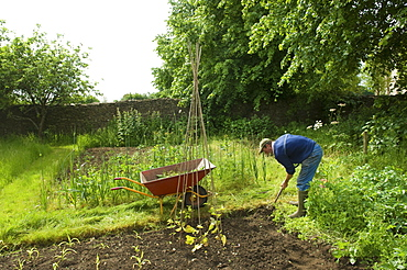 A man digging his vegetable garden, and planting young plants, Farm, Gloucestershire, England