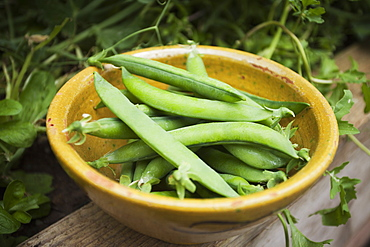 Bowl of freshly picked peas, Avon, England