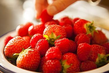 Bowl of fresh strawberries, Bristol, England