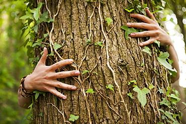 A person hugging an oak tree. Hands spread across the bark, Devon, England