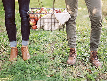 An apple orchard in Utah. A couple carrying a basket of apples, Sataquin, Utah, United States of America