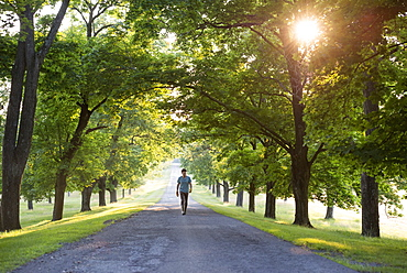 A man walking down a tree lined avenue in the countryside, Woodstock, New York, USA