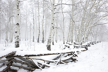 Cold winter, snow on the ground. Felled trees and a crushed fence, Utah, USA