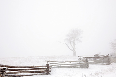 A cold winter's day, with white sky and snow on the ground. Mist obscuring trees, Utah, USA