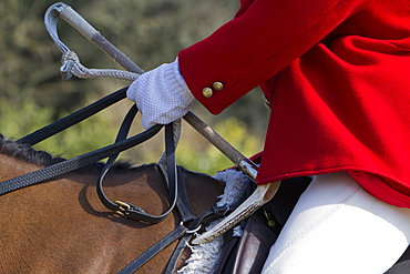 A Master of Foxhounds in a traditional hunting coat, on horseback, Master of Foxhounds, England