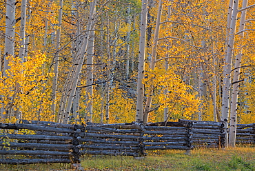 The Kolob Terrace and aspen trees in the Dixie national forest, Dixie National Forest, Utah, United States