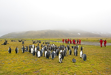 Group of people watching a small colony of King Penguins on South Georgia.