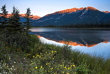 Mountains reflected in a lake and a meadow of wild flowers in the Canadian Rockies.