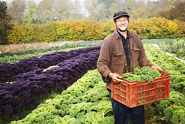 A man carrying a crate of freshly harvested cabbages