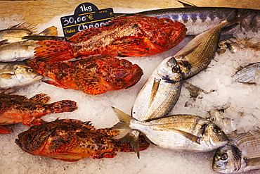 A display of fresh fish on ice on a market stall, France