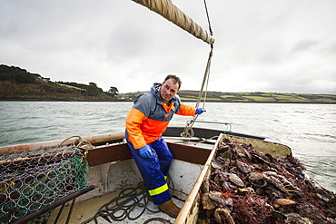 Traditional sustainable oyster fishing, A fisherman on a sailing boat sorting the oyster catch , Fal Estuary, Cornwall, England