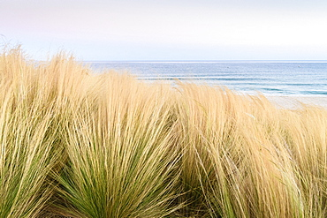 Close up of grass on dunes on the coast in Andalusia, Spain
