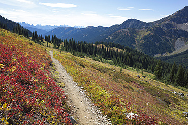 Hiking trail in the North Cascades, Pacific Crest Trail through pristine alpine wilderness, autumn, near Granite Pass, Pasayten Wilderness, Okanogan National Forest, Washington, United States of America