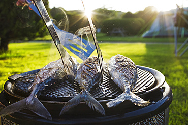 A small barbecue with three fresh mackerel fish on the grill, and a person using tongs to turn the fish, England, United Kingdom