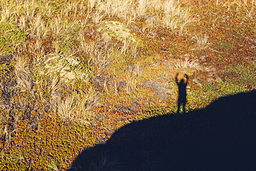 High angle view of shadow of man with raised arms, standing on hill above landscape covered with ice plant.