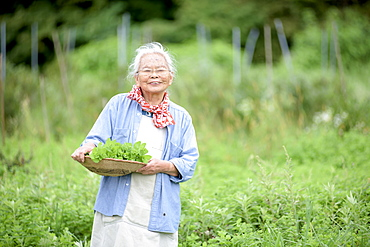 Elderly woman with grey hair standing in a garden, holding basket with fresh vegetables, smiling at camera, Japan