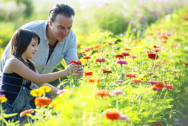 Summer on an organic farm. A man and a girl in a field of flowers.