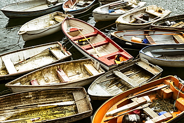 Small wooden rowing boats moored on long lines in a harbour, packed together, Cornwall, England