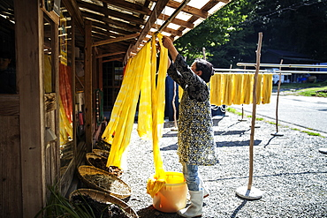 Japanese woman outside a textile plant dye workshop, hanging up freshly dyed bright yellow fabric, Kyushu, Japan