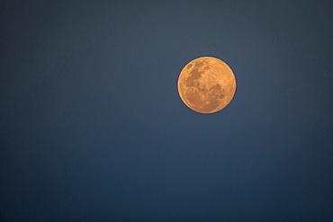 A full moon at dusk, orange-pink moon against dark-blue background, Londolozi Game Reserve, Sabi Sands, Greater Kruger National Park, South Africa