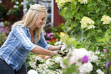 An organic flower plant nursery. A woman working.