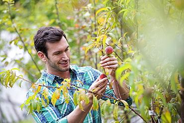 An organic flower plant nursery. A man working, tending the plants.