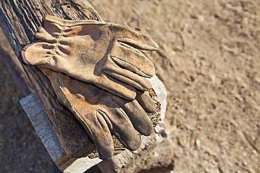 Work Gloves, Entrada, Colorado, United States of America