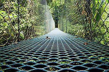 Footbridge in Costa Rican Forest, Costa Rica