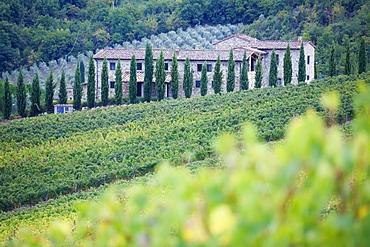 Stone Farmhouse and Vineyard, Panzano, Tuscany, Italy