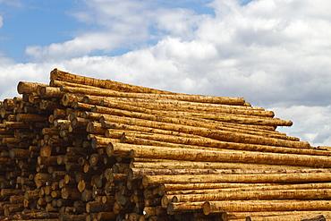 Stacked fresh timber, Portland, Oregon, United States of America
