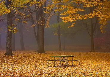 Picnic Table in a Park, Portland, Oregon, United States of America