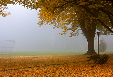 Park in Autumn, Portland, Oregon, United States of America