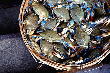 Basket of Crabs, New York City, New York, United States of America