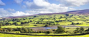 Hillside Pastures, Swaledale, Yorkshire Dales, England, UK