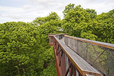 Tree Walkway in Kew Gardens, London, England, UK