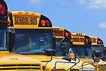 Yellow school buses parked diagonally, Bradenton, Florida, United States of America