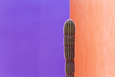 Cactus Against Contrasting Walls, San Jose los Cabos, Baja California, Mexico