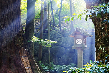 Rays of Sunlight Shining through a Japanese Forest, Ise, Japan