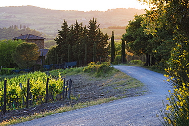 Country Road at Sunset, Toscana, Tuscany, Italy