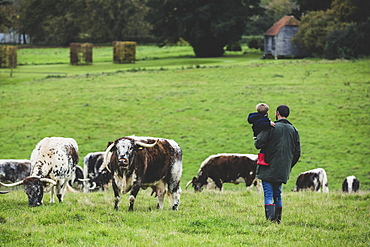 Man carrying young boy standing on a pasture, with English Longhorn cows in the background, Oxfordshire, England