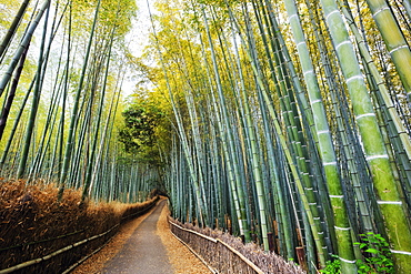 Bamboo lined path, Kyoto, Japan