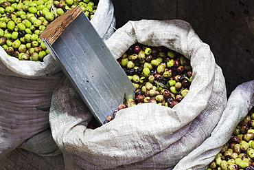 Green Olives for Sale, Jerusalem, Israel