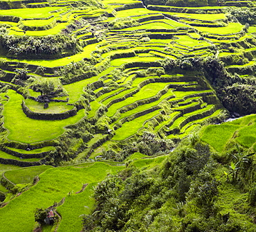Aerial view of terraced paddy fields, Banaue, Infugao Province, Philippines, Banaue, Infugao Province, Philippines
