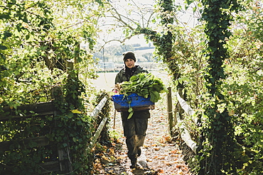 Woman walking towards camera, carrying blue crate with freshly harvested vegetables, Oxfordshire, England